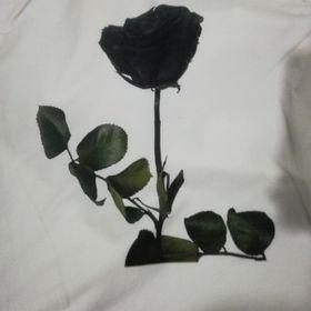 hoa hồng đen giá sỉ