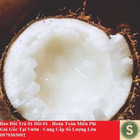 Dừa Sáp Loại Hai GIÁ TẠI VƯỜN giá sỉ