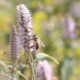Mật ong giá sỉ