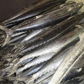 Cá Thu Khơi- Cá Thu Nguyên Con giá sỉ