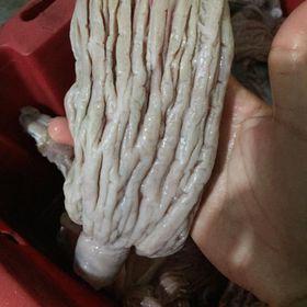 Bao Tử Cá Ngừ Đại Dương 45k giá sỉ