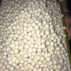Bánh Bột Lọc Nhân Dừa Huế giá sỉ