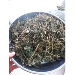 Trà Giảo cổ lam Sa Pa (loại 7 lá sao khô) gói 1kg giá sỉ