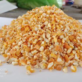 Bắp hạt bể mãnh (bắp gà) giá sỉ