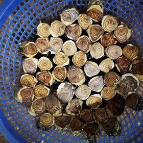 Vòng tay gỗ sưa đỏ vân hoa giá sỉ